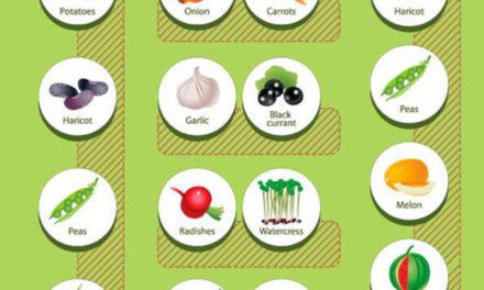 Companion Planting: A Gardener's Set of Basic Rules