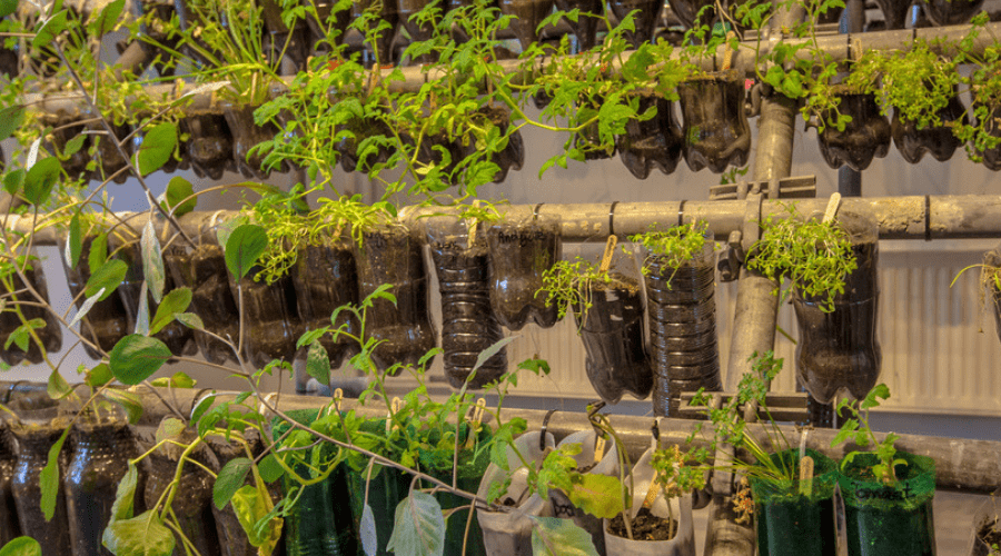 Featured Image - GROW YOUR OWN PLASTIC BOTTLE PLANT PARADISE