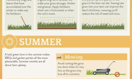 Everything You Should Know About Lawn Care Maintenance