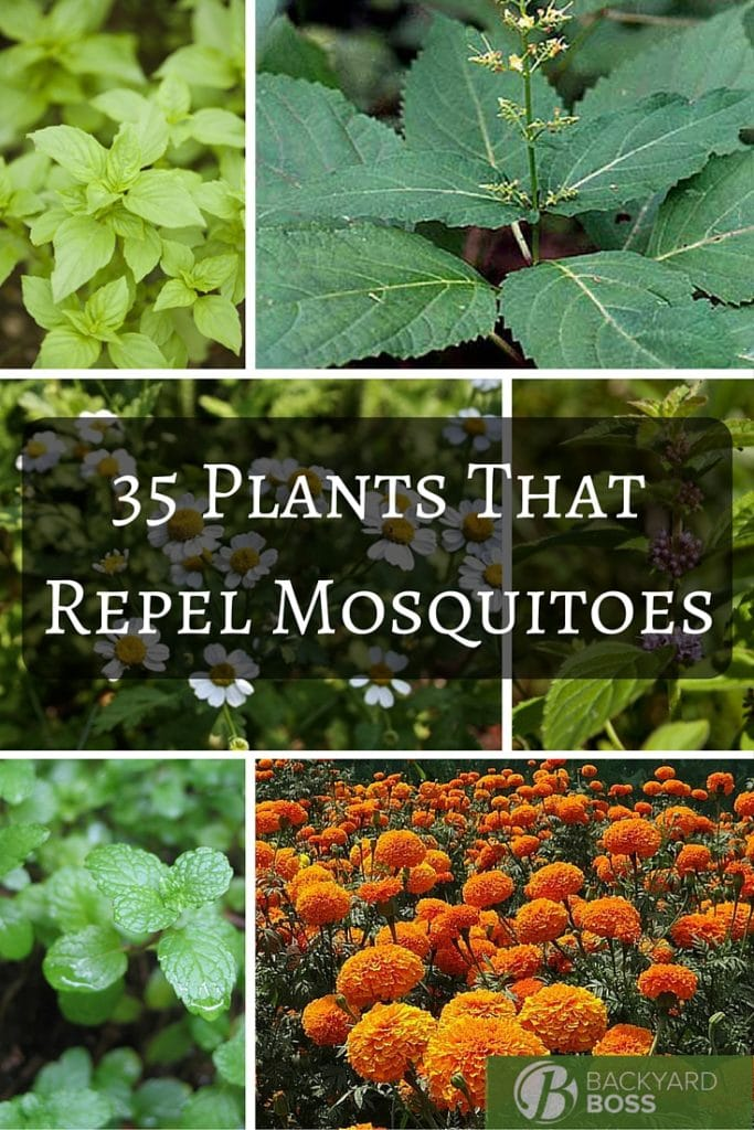 35 Plants That Repel Mosquitoes
