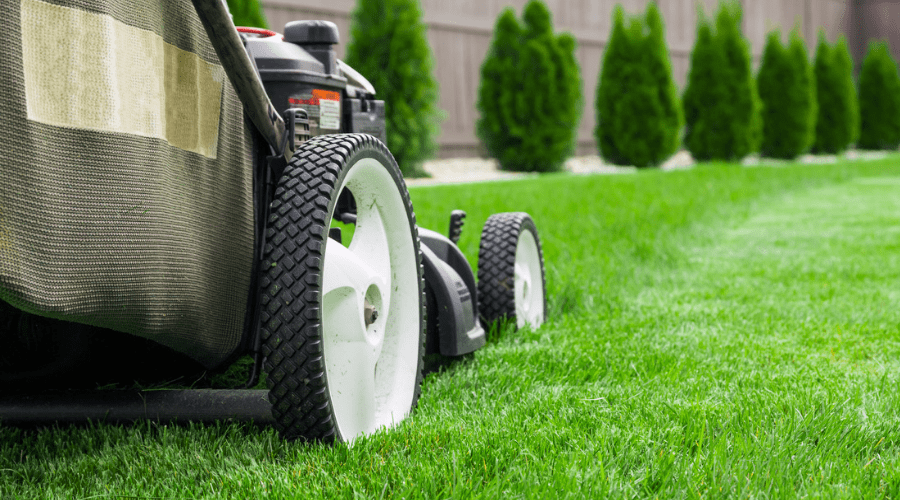 Featured Image - EVERYTHING YOU SHOULD KNOW ABOUT LAWN CARE MAINTENANCE