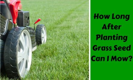 How Long After Planting Grass Seed Can I Mow?