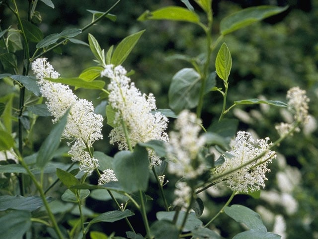 Plants That Repel Mosquitos And Flies