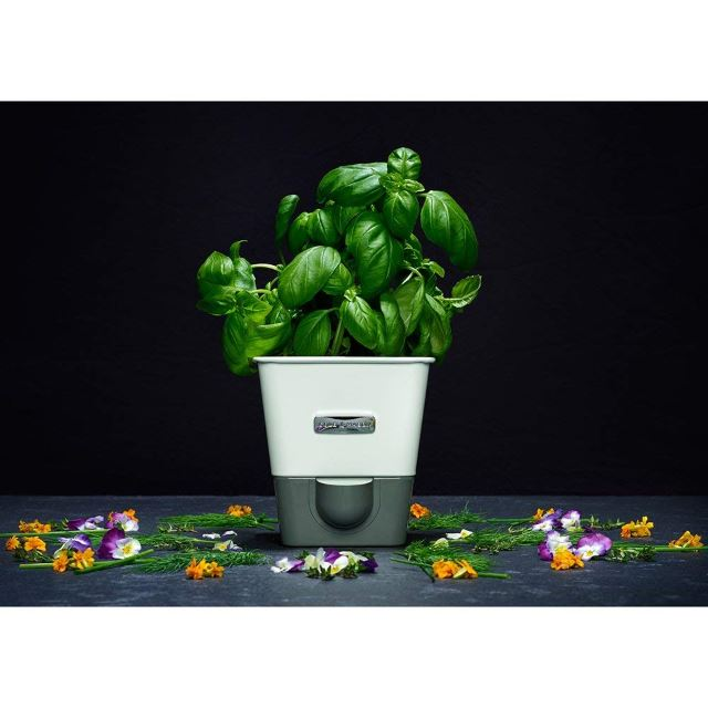 Self Watering Herb Gardens