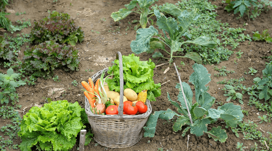 Featured Image - GROW A REVOLUTION IN YOUR BACKYARD_ HOW TO REDEFINE YOUR KITCHEN GARDEN