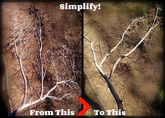 Step 2 Cut, Trim, Simplify