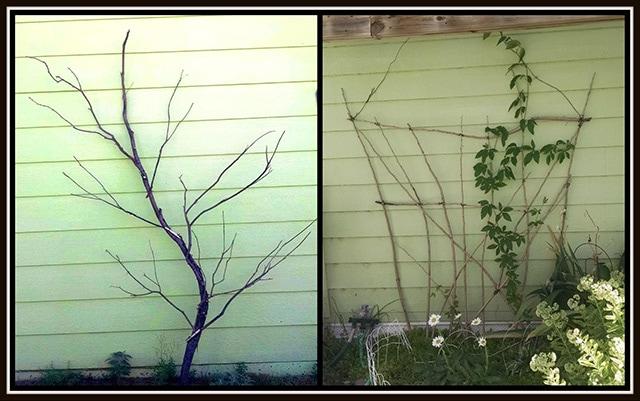 DIY Garden Trellis: Rustic Wooden Backdrops For Your Climbing Beauties
