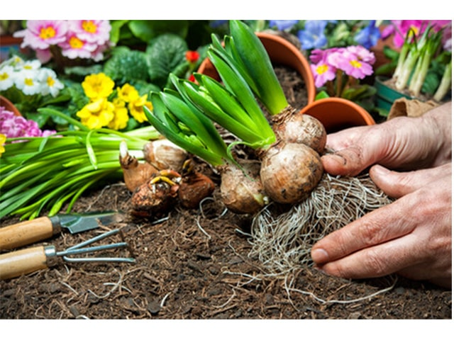 Dig Up Your Bulbs