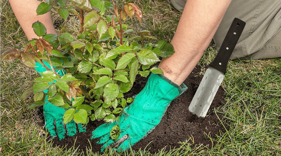 Featured Image - BEST WEEDING TOOLS_ 5 WAYS TO HELP ERADICATE UNWANTED VEGETATION