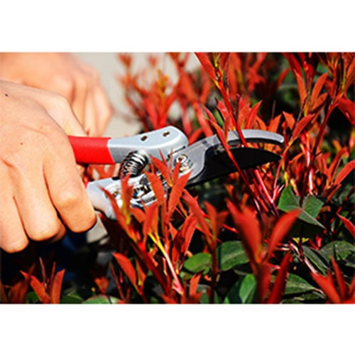 cutting thick weeds