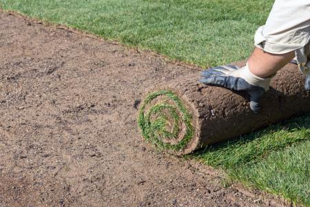 new sod lawn
