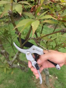 pruning young trees