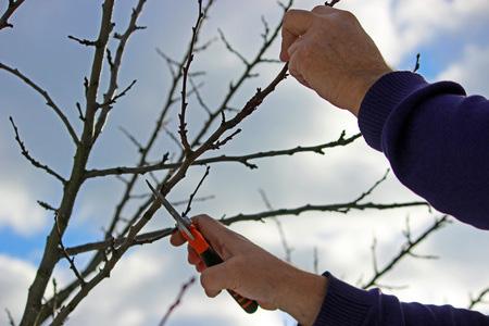 restoring-a-tree