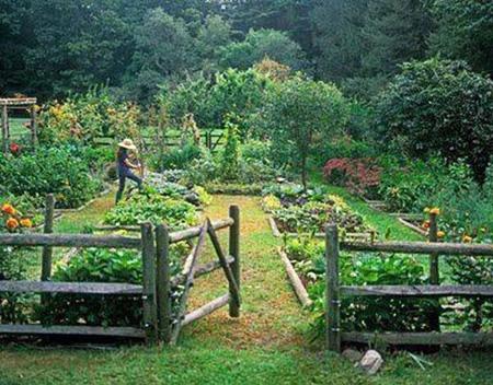 log fence Garden