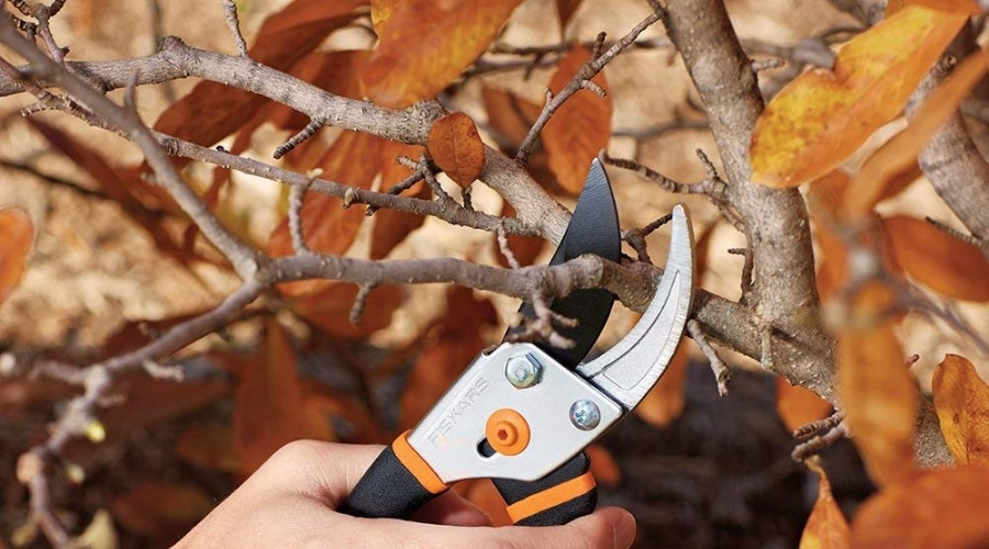 Featured Image - SIMPLE SEASONAL MAINTENANCE_ WHEN TO PRUNE AND WHY