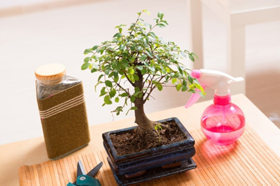 how to use with houseplants
