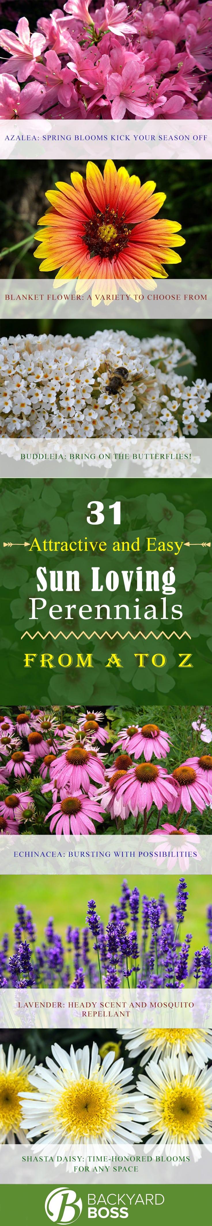 31 Attractive And Easy Sun Loving Perennials