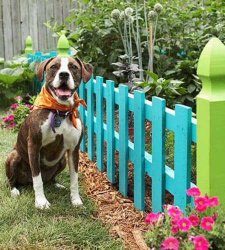 dogs and gardens fence