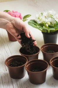 new potting soil