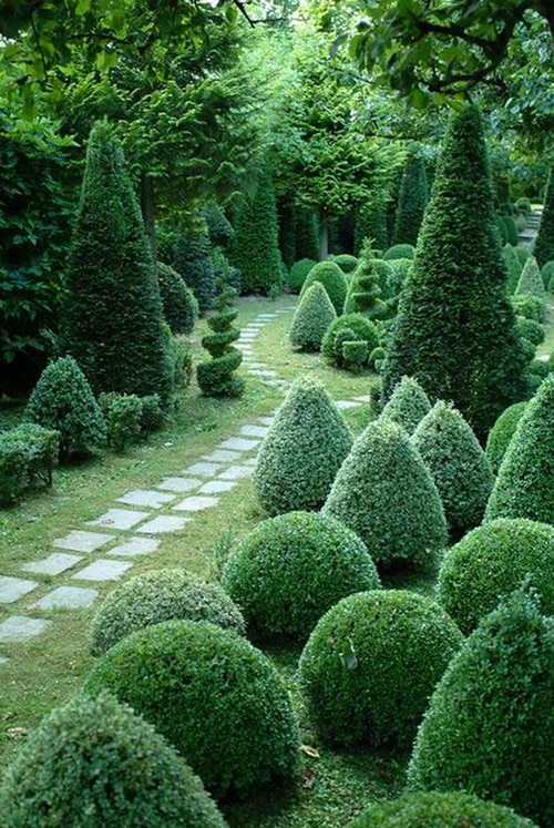 a world of shrubs