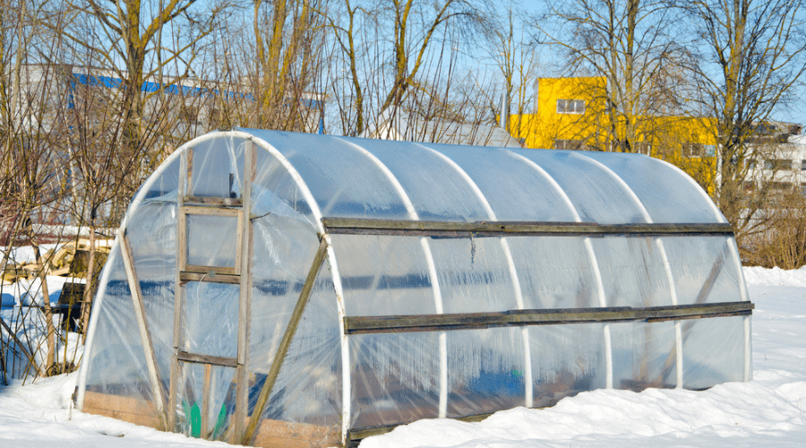 Featured Image - HOW TO PROTECT YOUR PLANTS THIS WINTER