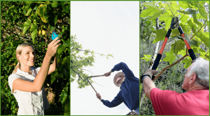 Featured Image - HOW TO PRUNE PRODUCING FRUIT TREES