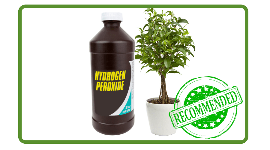 Featured Image - MEGA REASONS WHY HYDROGEN PEROXIDE FOR PLANTS IS A MUST (1)
