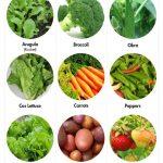 Garden Sunlight Guide