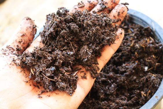 fertilize soil in hand