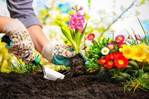 spread-the-potting-soil-in-flowerbed