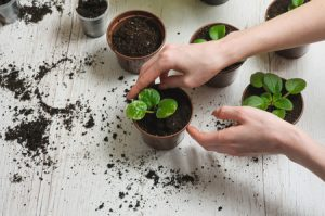 using-a-potting-soil