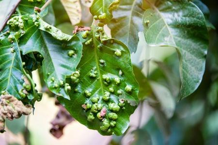 Diseased plants