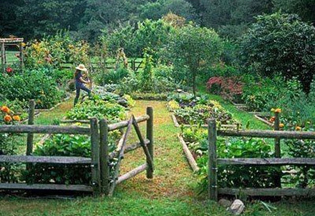 Connecticut-Kitchen-Garden