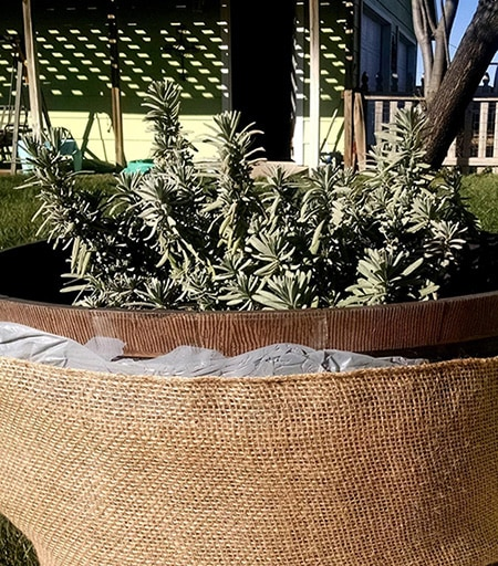 But There Are Varied Ways To Keep Your Outdoor Potted Plants Safe From Freeze In Almost Any Condition And I Will Explain Those Below