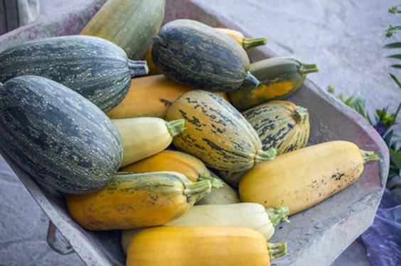 harvested-veggies
