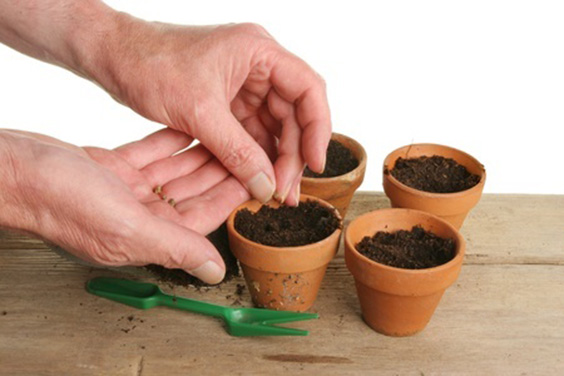how-to-plant-seeds