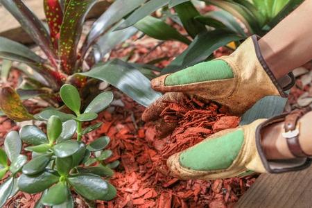 mulching-a-plant