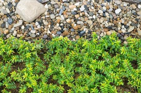 pea-gravel-in-garden