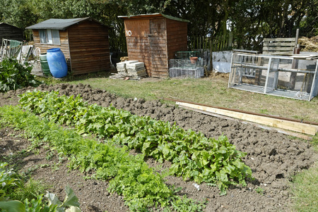 Itu0027s Amazing How Much A Small Plot Will Grow, So Plan Out Your Garden In  Advance And Keep In Mind The Care You Will Need To Put Towards It Through  The ...
