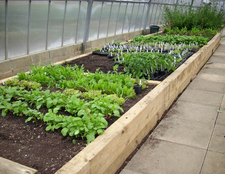 Vegetable gardening for beginners Raised bed vegetable gardening for beginners
