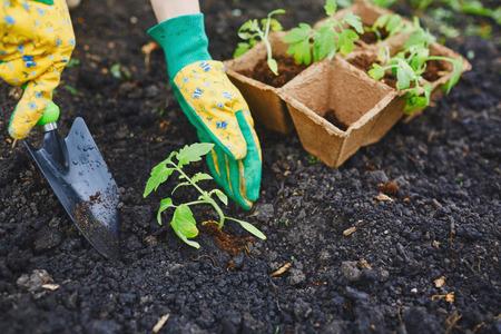 replanting