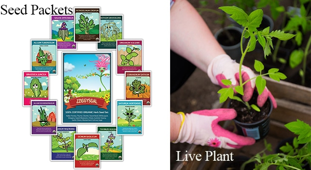 seed-packets-and-live-plant