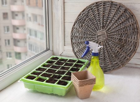 seed-pot-near-window