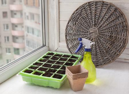 seed-pot-near-window