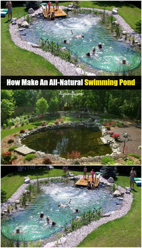 A-Dip-in-the-Pond