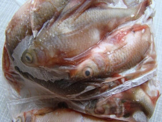 Fish Damaged by Spending too long in freezer