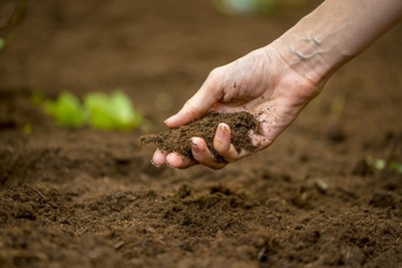 147 things you can compost and 9 things you cant matter for Things in soil