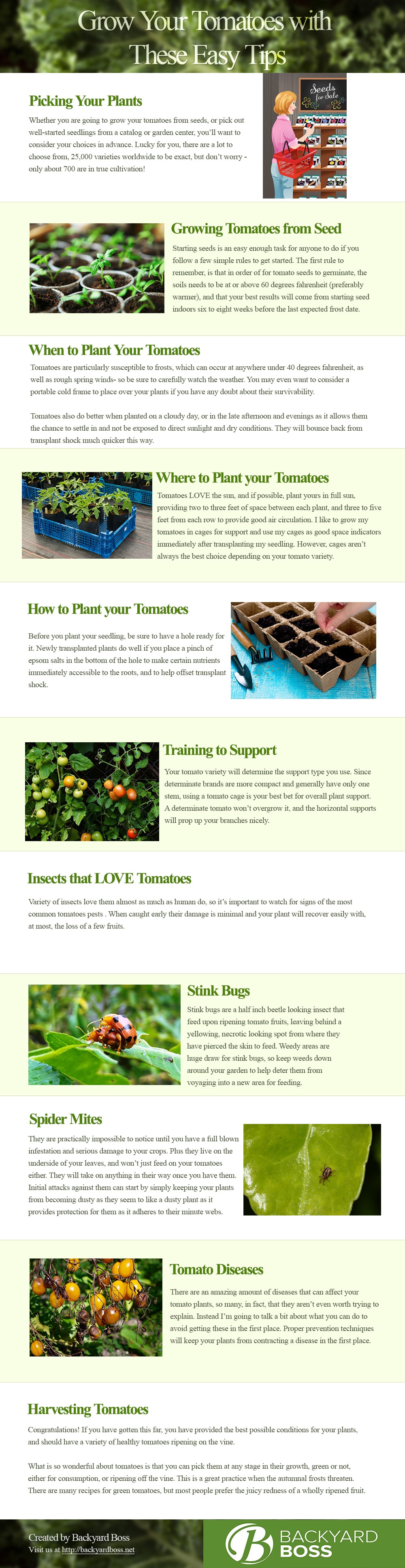 Grow Your Tomatoes with These Easy Tips infographics