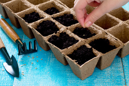 How-to-Plant-your-Tomatoes