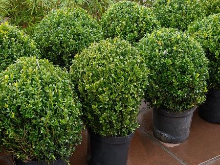 Juvenile Plantings